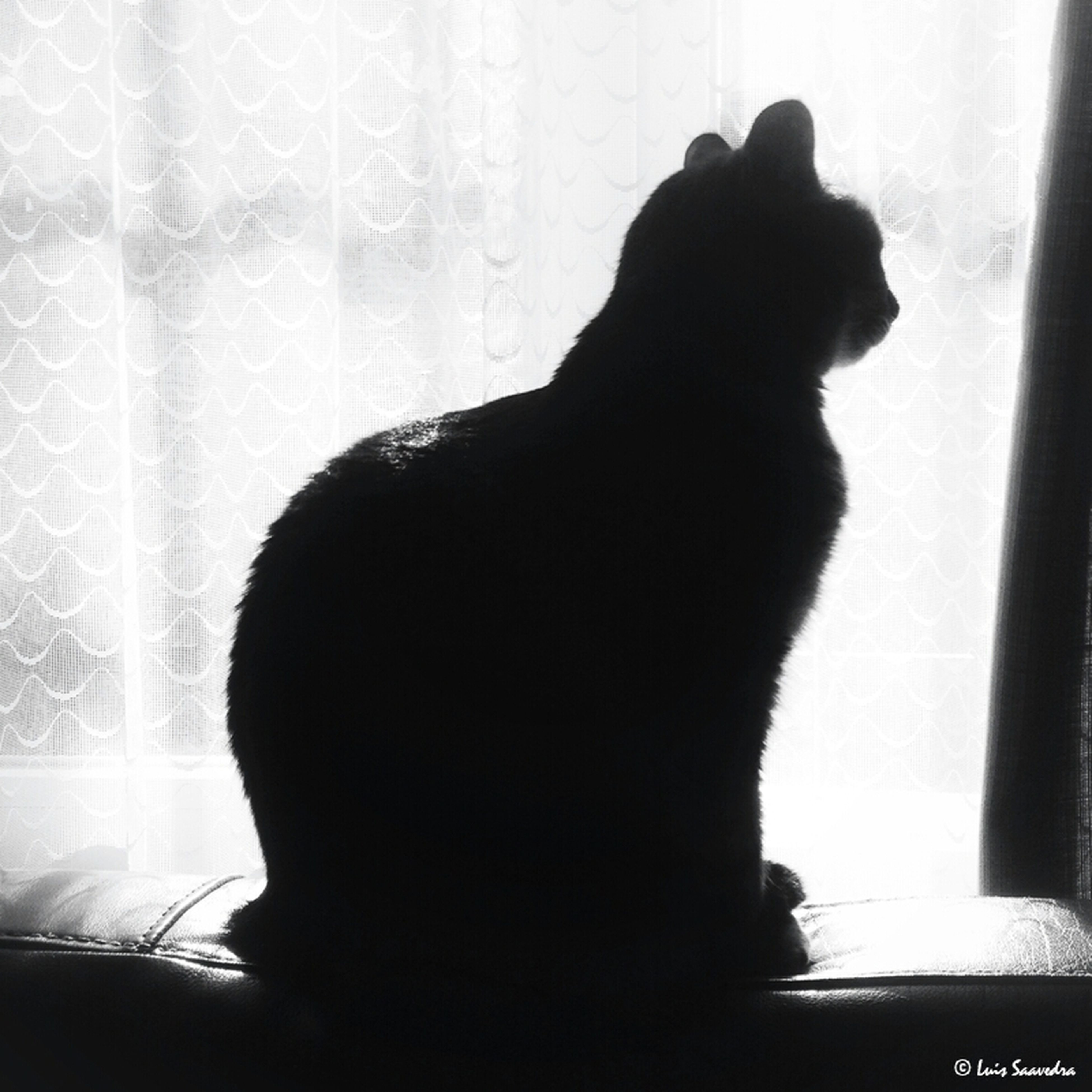 indoors, pets, domestic animals, domestic cat, cat, animal themes, one animal, mammal, window, feline, sitting, home interior, silhouette, relaxation, looking through window, glass - material, window sill, transparent, rear view, side view