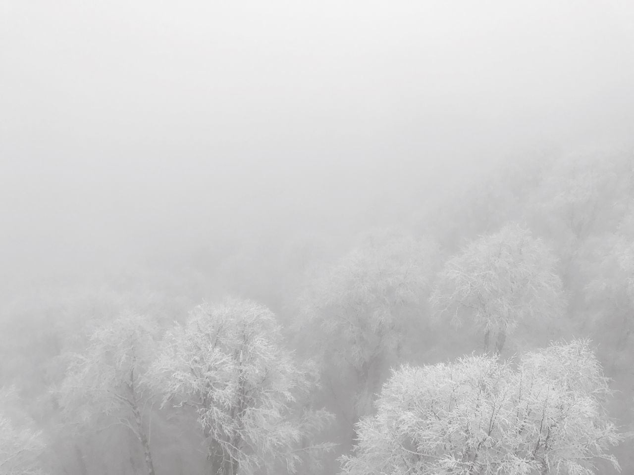 Flying High Weather Fog Treetop No People Tree Beauty In Nature Nature Sochi Krasnaya Polyana