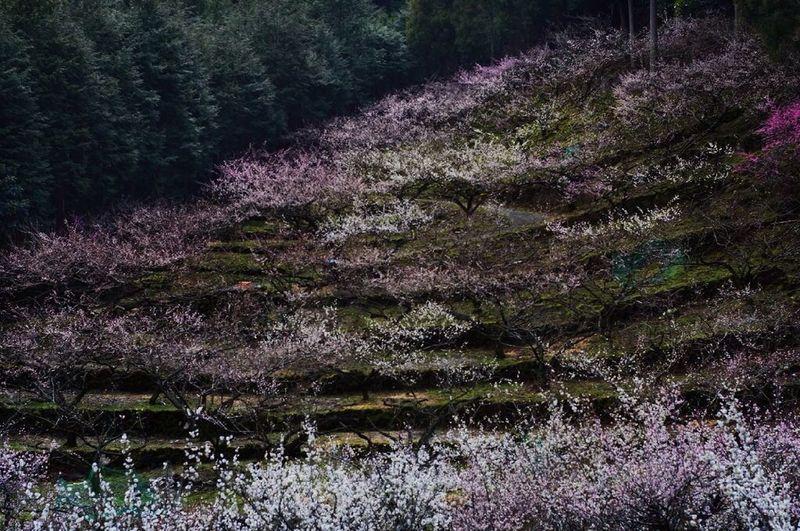 Flowers JapaneseSpring Spring 徳島県