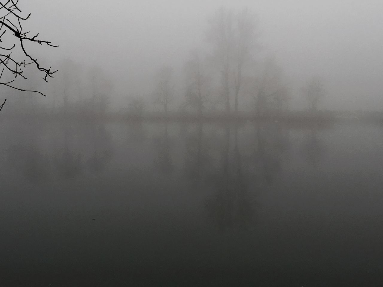 fog, mist, foggy, hazy, tree, nature, weather, tranquility, beauty in nature, no people, tranquil scene, landscape, scenics, winter, outdoors, day, cold temperature, sky