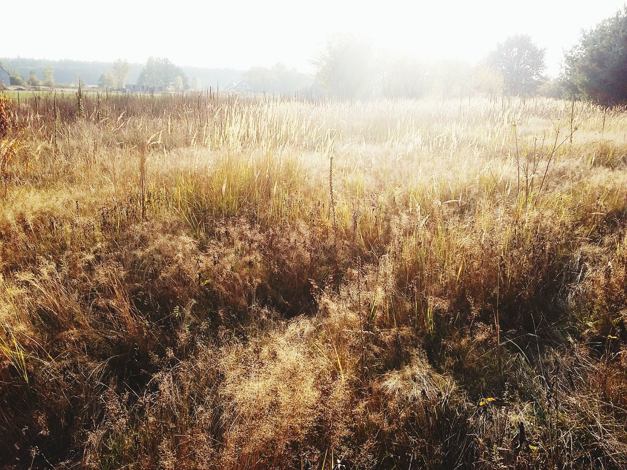just grass ✌ /good morning everyone 😀 First Eyeem Photo Grass Poland Beautiful Sun Sunset