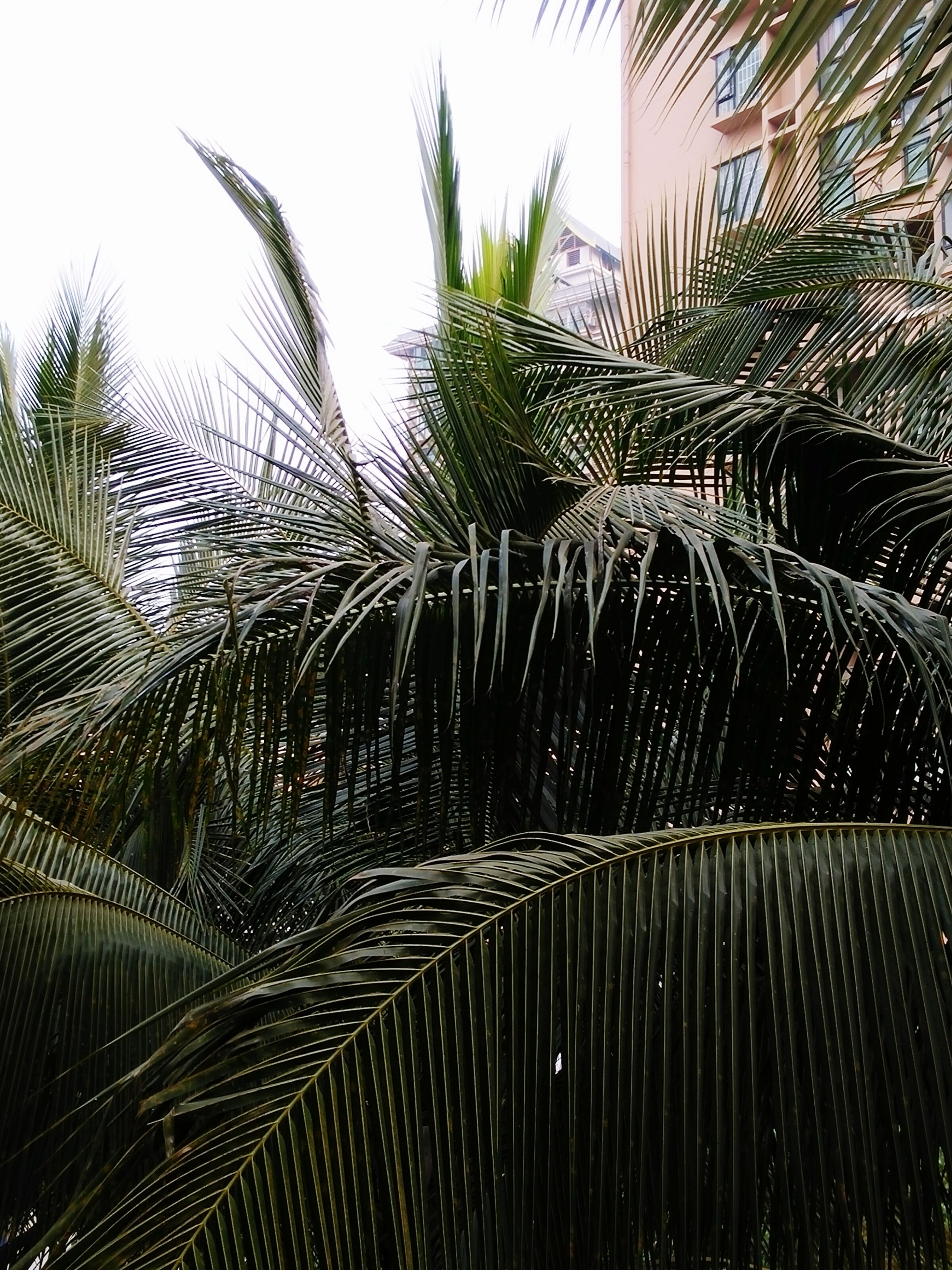 growth, low angle view, leaf, nature, tree, clear sky, pattern, day, plant, palm tree, outdoors, sky, close-up, building exterior, no people, wet, sunlight, spider web, built structure, palm leaf