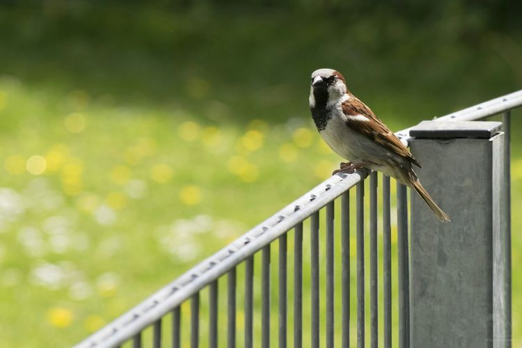 Sparrow Bird Bohkeh Naturelovers Nature Photography Beautiful Nature Bird Photography Photography Taking Photos Walking Around