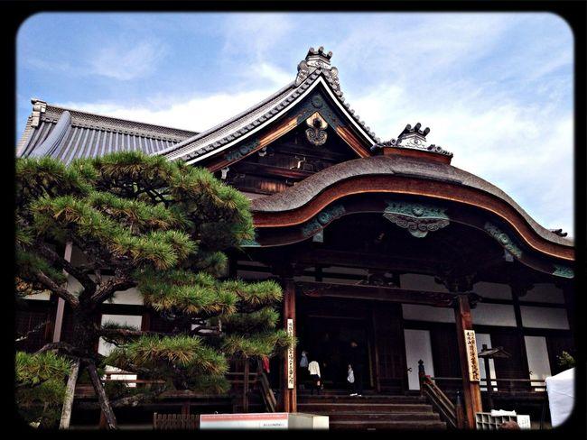 清浄華院 大殿 The Purist (no Edit, No Filter) Taking Photos Temple Architecture