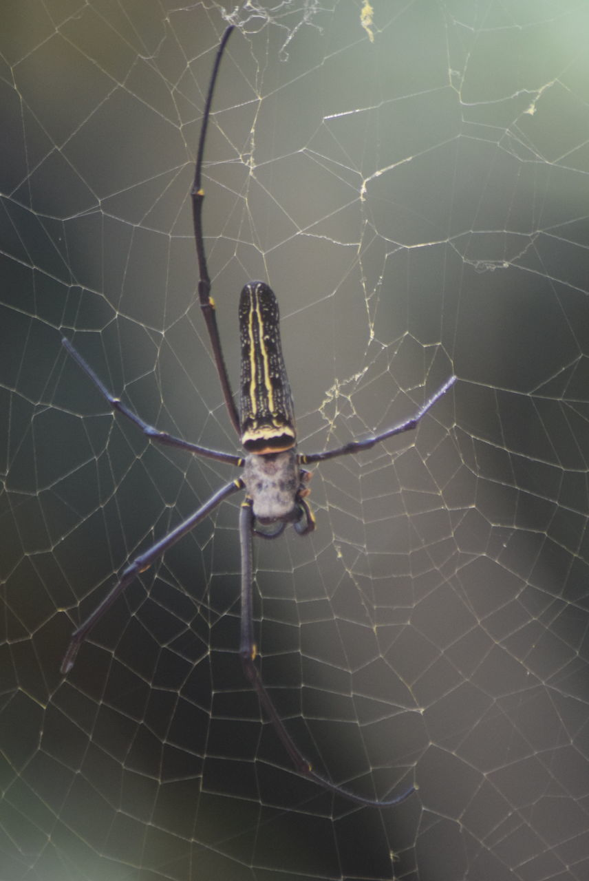 spider web, spider, one animal, survival, animals in the wild, animal themes, web, animal leg, insect, close-up, day, animal wildlife, nature, outdoors, no people, focus on foreground, complexity, fragility