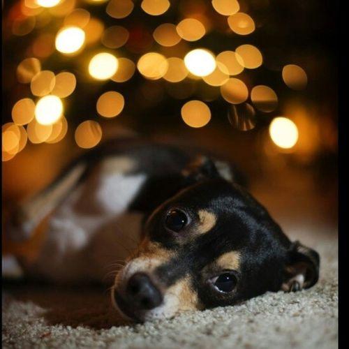 Muito ownt essa foto. Fofo Dog Animal Queropramim