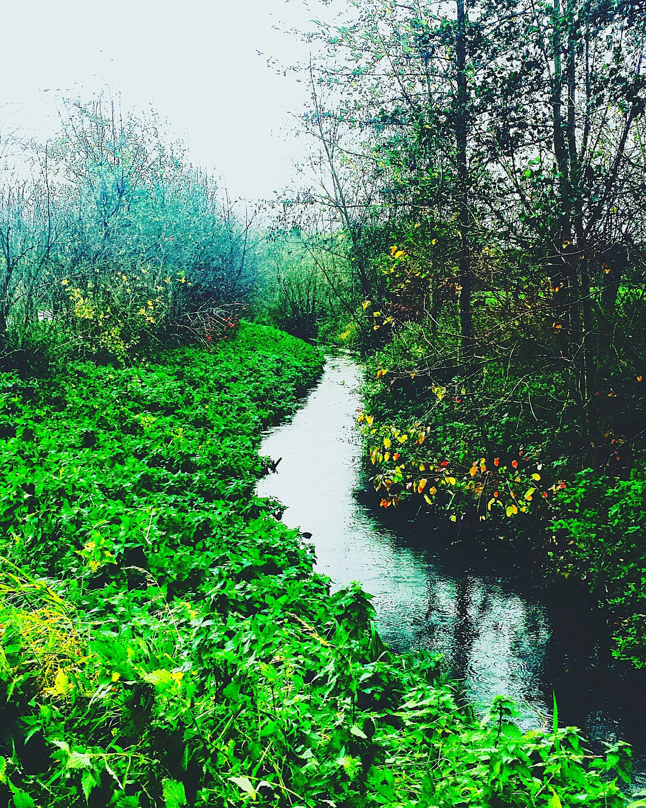 Nature Edit DOPE Love Life Hopeyoulikeit First Eyeem Photo Formorephotos Tim.loves.photography Instagram Contrast Deepintheforest River Madeingermany Winter Cold