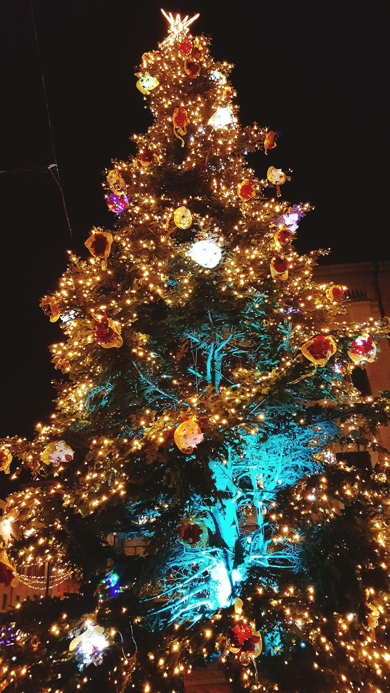 Christmas Tree Christmas Celebration Christmas Decoration Christmas Lights Night Tradition Tree Holiday - Event Illuminated