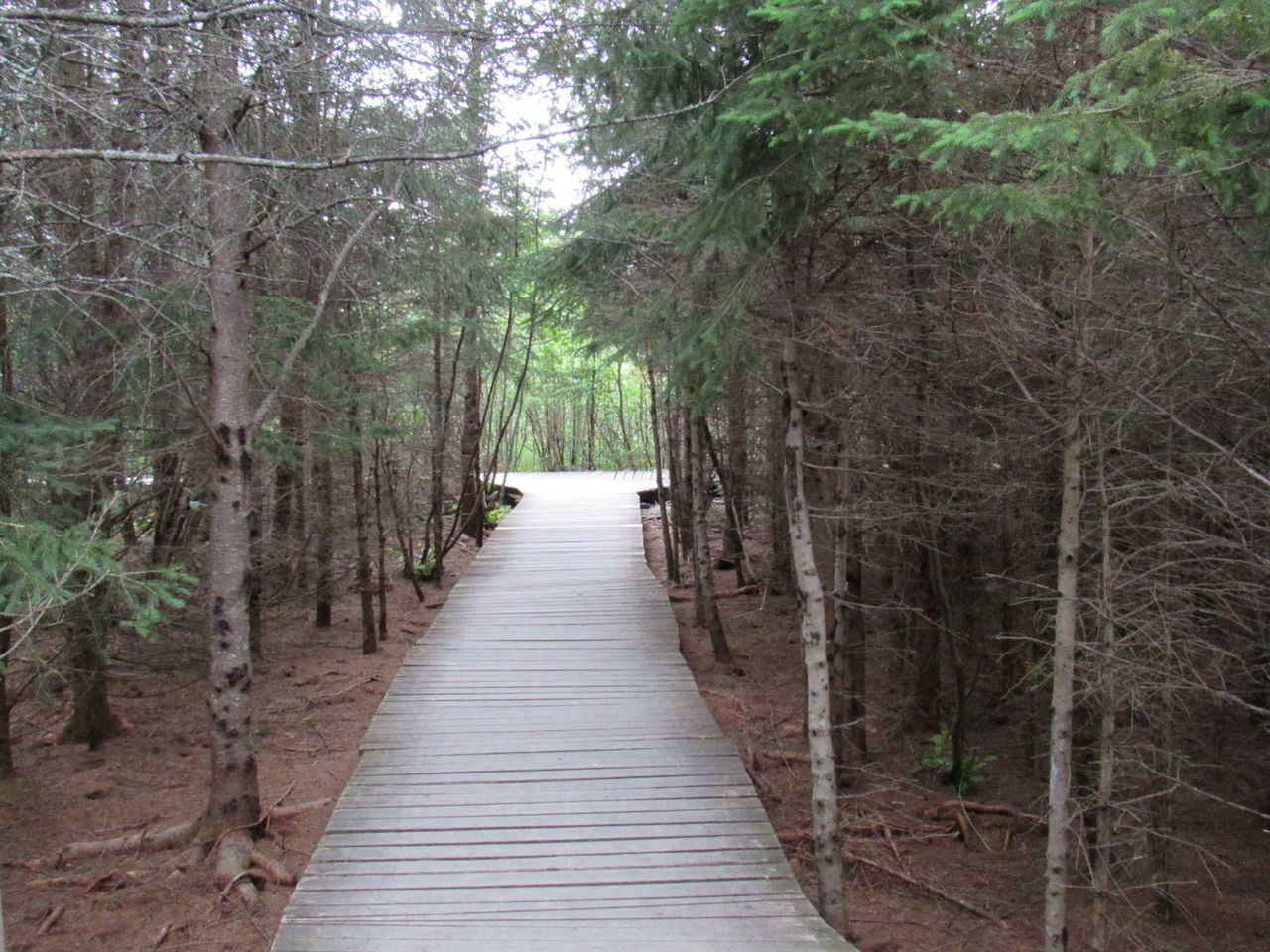 Quebec Sentier Foret Arbre Refuge Nature