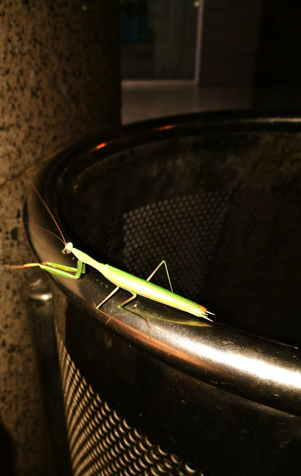 A mantis Taking Photos Cheese! Mantisgram Green Mantisinatrush Beautiful Beautiful Nature