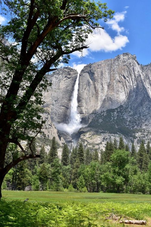 Waterfall Scenics Tree Beauty In Nature Nature Motion Water Environment Idyllic No People Sky Travel Destinations Forest Outdoors Landscape Cliff Day Power In Nature Mountain Yosemite Falls Yosemite National Park