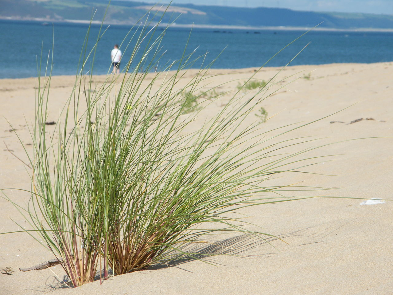 Close-Up Of Plant At Beach