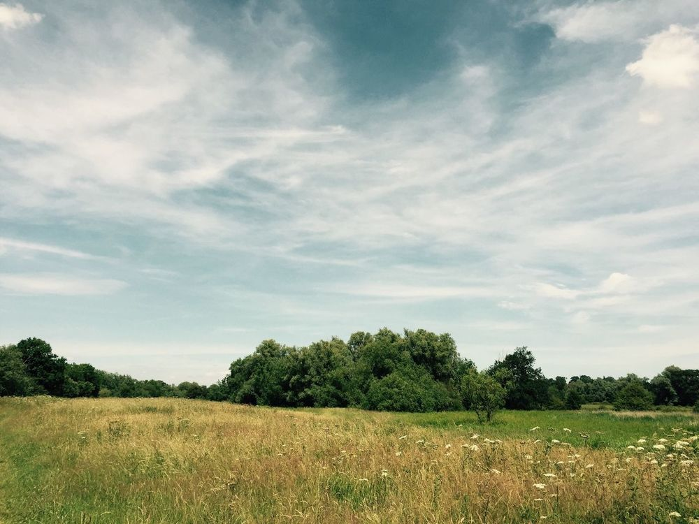 The field Tree Landscape Nature Growth Field Tranquility Grass Sky Scenics Tranquil Scene No People Outdoors Beauty In Nature Day Glade Rural Scene Green Color Full Frame