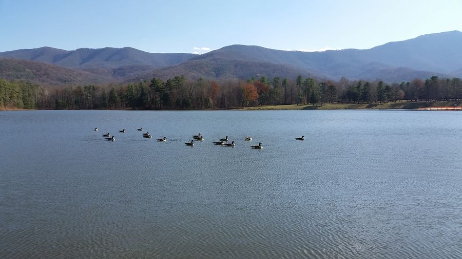 Bird Flock Of Birds Lake Arrowhead Landscape Landscapes With WhiteWall Luray Mountain Mountain Range Nature Tranquil Scene Tranquility Water Wildlife