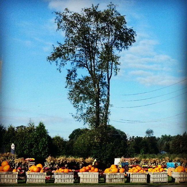 Pick a size Pumpkins Earlyautumn Pumpkinpatch Yetagain ilovehalloween landscape farmersmarket harnersfarm ruralamerica rurex trb_members1 happyvalley pennsylvania
