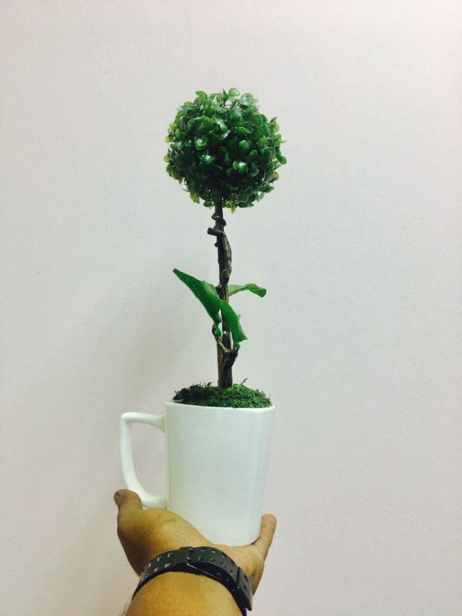 Hold On - table flower Growth Potted Plant Plant Green Color Nature Indoors  Close-up No People Tree Freshness Beauty In Nature Day White Background Nagetiv Space Scenics