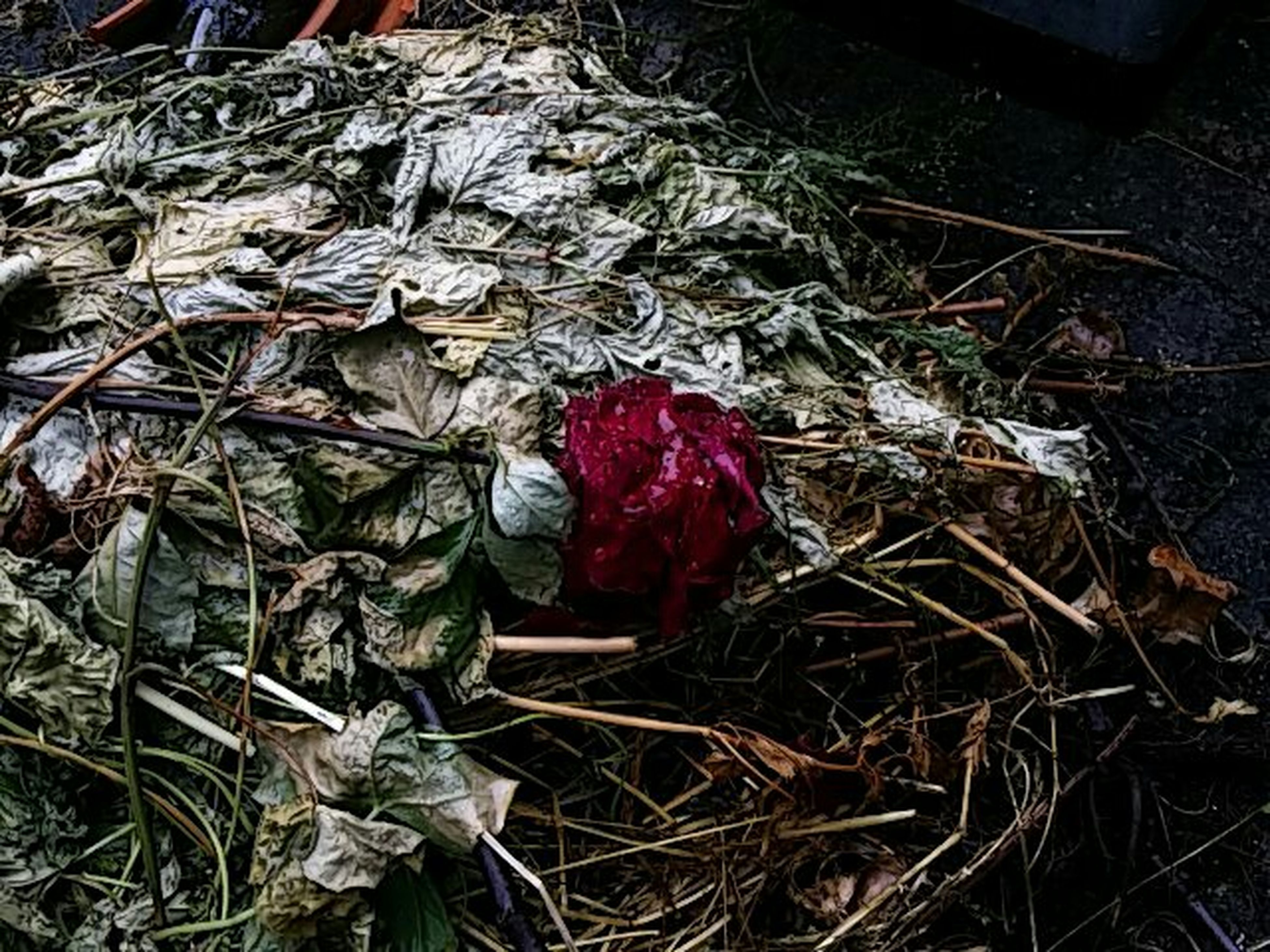 red, dry, high angle view, no people, hanging, day, still life, abandoned, art and craft, outdoors, wood - material, messy, large group of objects, close-up, plant, abundance, leaf, damaged, art, creativity
