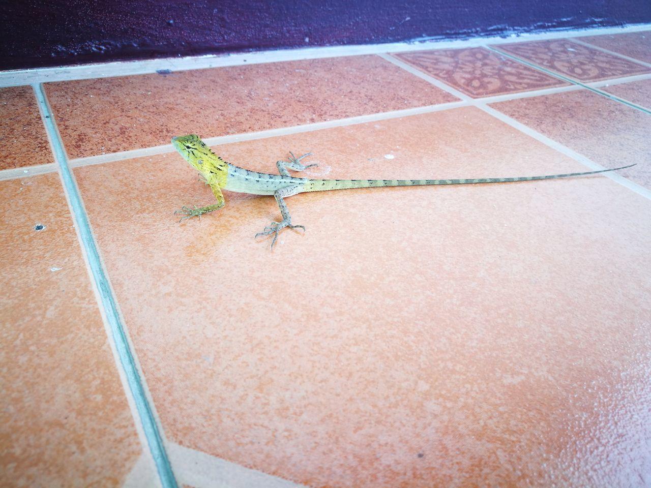 กิ่งก่า Lizard Lizard Nature One Animal Outdoors Day Animal Themes