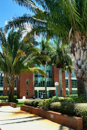 Student Life College South Florida Palm Trees On Campus Cramming For A Test Summer School Studying Sunshine Florida My Student Life