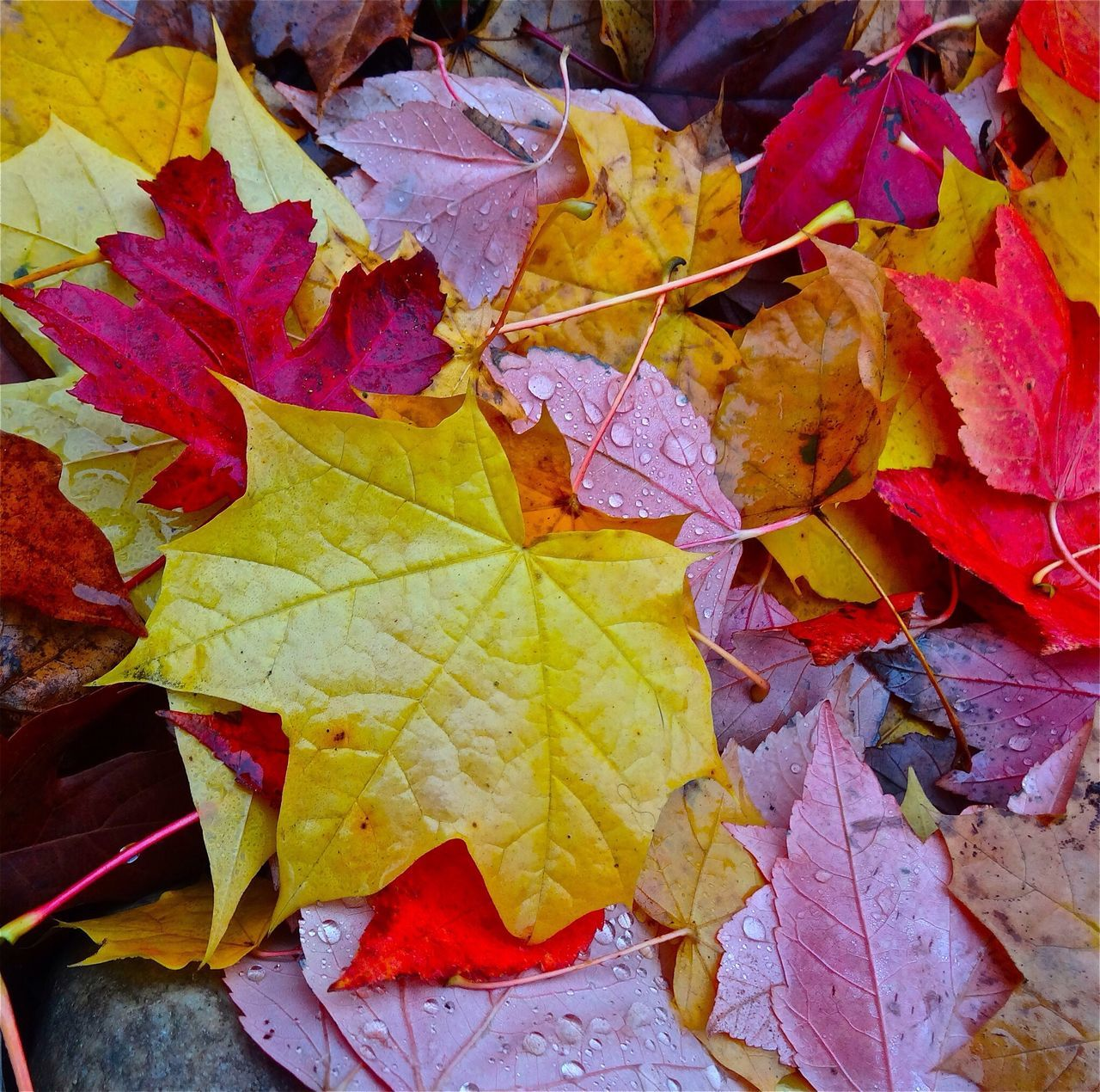 EyeEm Best Shots - Autumn / Fall EyeEm Nature Lover Macro_collection Color Explosion