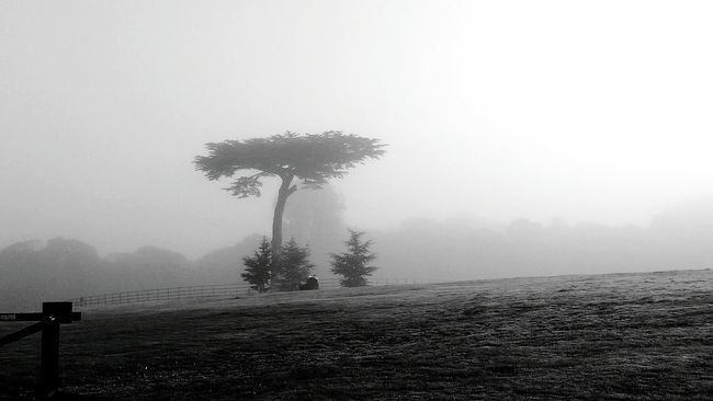 Autumn mist in cassiobury park watford. Tree Fog Nature Landscape Monochrome Photography Misty Morning Silhouette Autumnweather Cassiobury Park