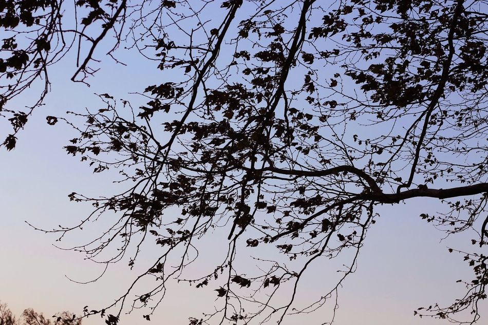 Atardeceres de ensueño Sunrise_sunsets_aroundworld Alamo Hojas Trees Leaves Canada Canont3 50mm F1.8