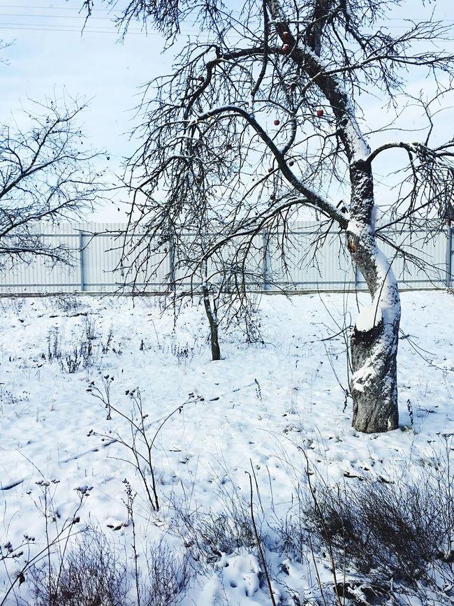 Snow Snow ❄ Snowing Snow Day Snow❄⛄ Snowday Snow❄ Snow Day ❄ Eye4photography  EyeEm EyeEm Gallery Eyemphotography Eyeemphotography