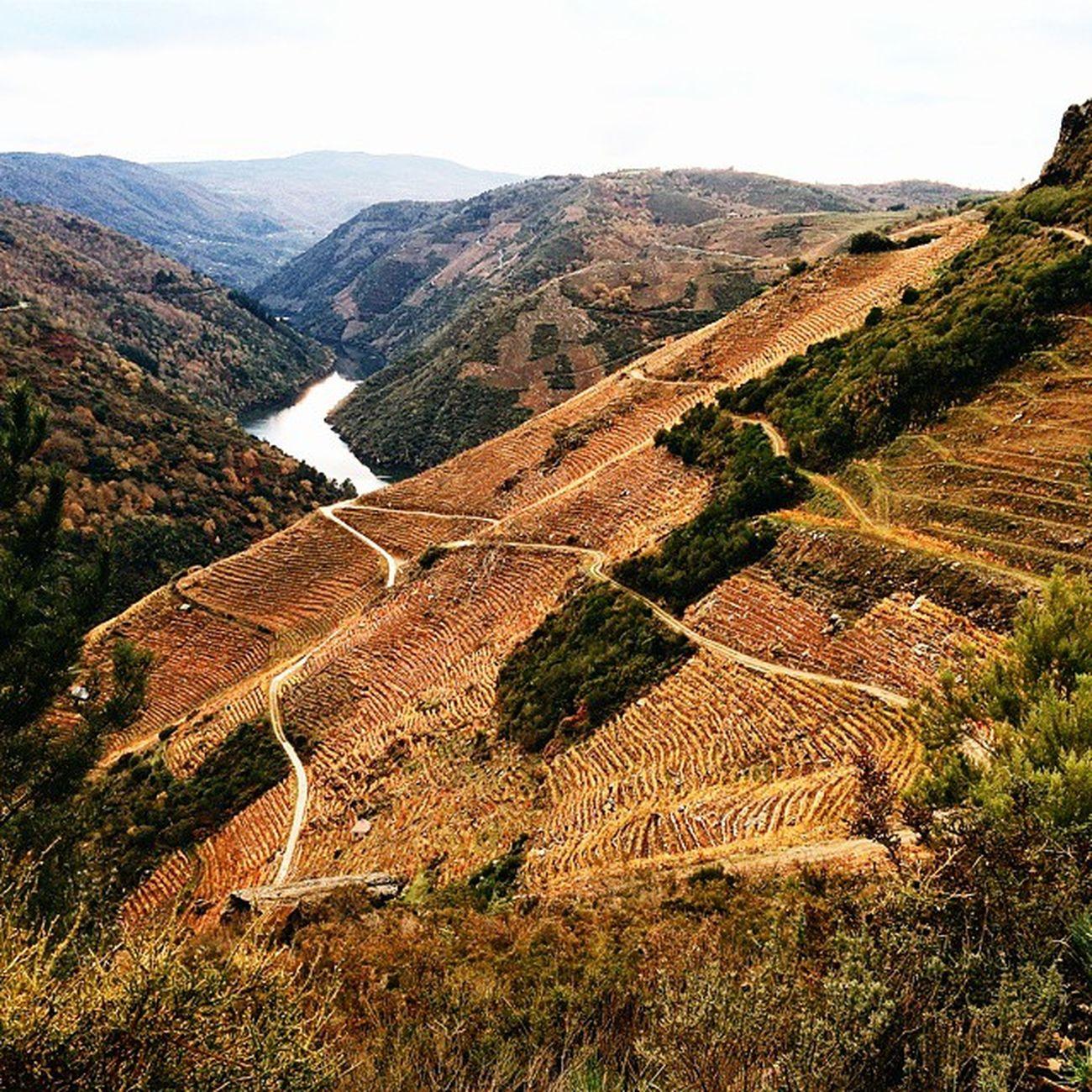 Los Viñedos de la RibeiraSacra bajando al Sil
