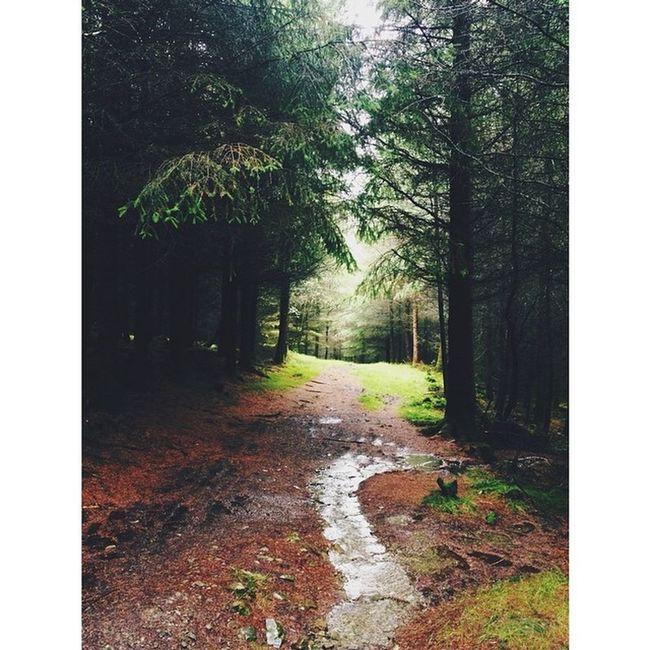 Walkies in Grizedale. Livemoreyha Grizedale Hawkshead Forrest