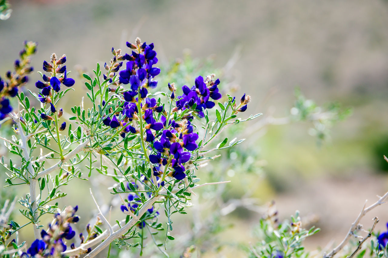 Beauty In Nature Close-up Day Flower Flower Head Fragility Freshness Growth Insect Nature No People Outdoors Plant Purple