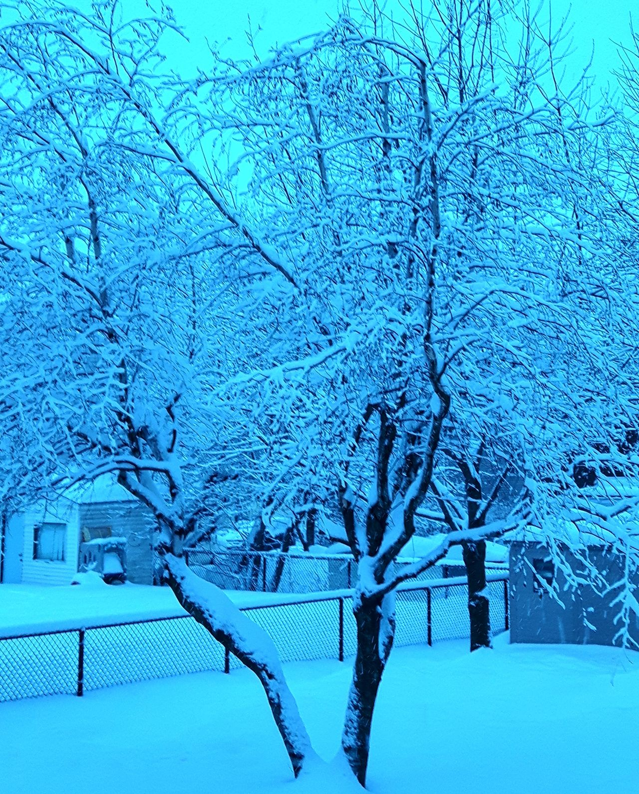 Tree Nature Blue Beauty In Nature Outdoors Snow Cold Temperature Tranquility Day Winter Granby Frozen Canton De L'Est The City Light Cold Cold Days Canada Snow Covered Beauty In Nature Quebec, Canada Colors