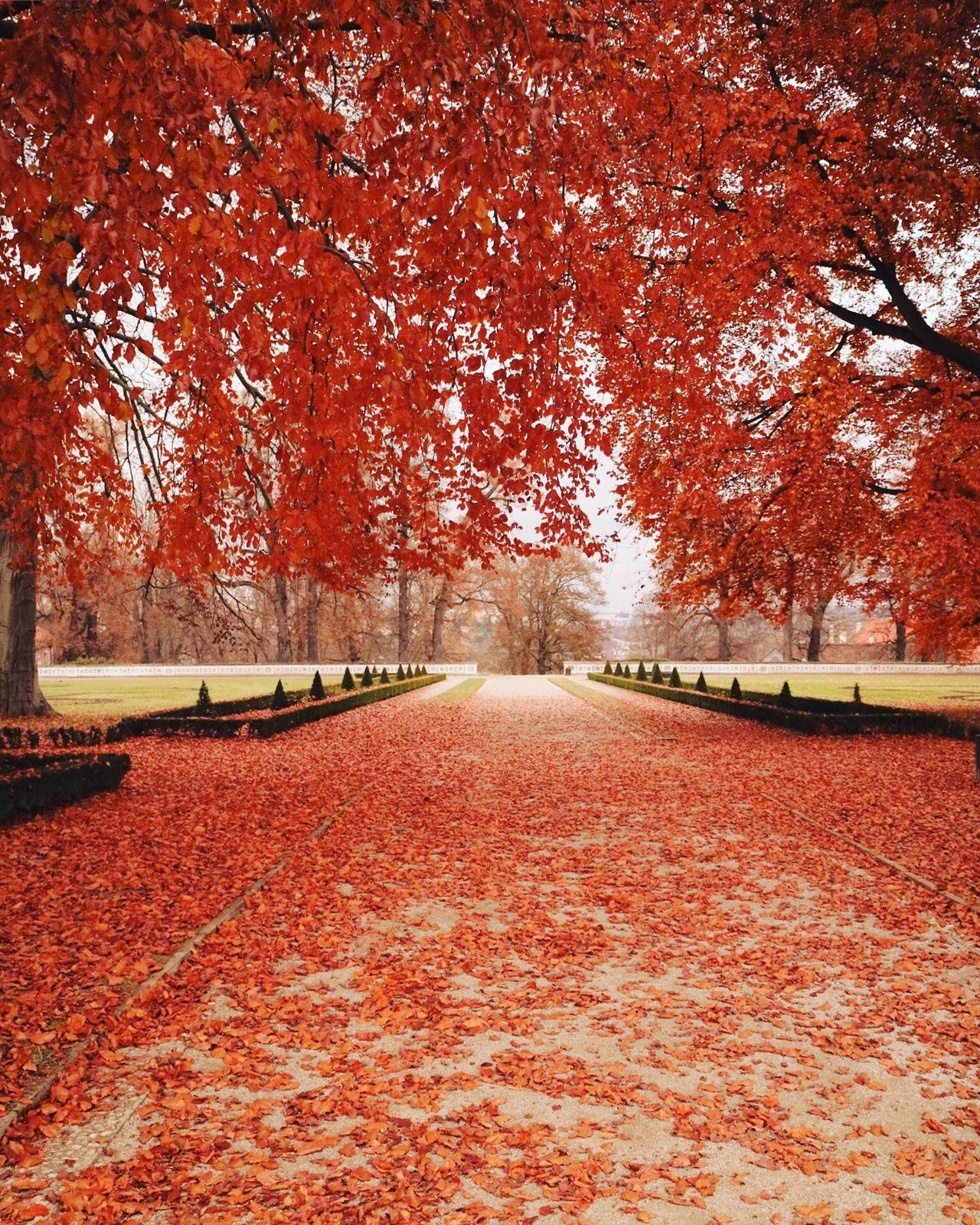 Czech🇨🇿 Czech Republic Fall
