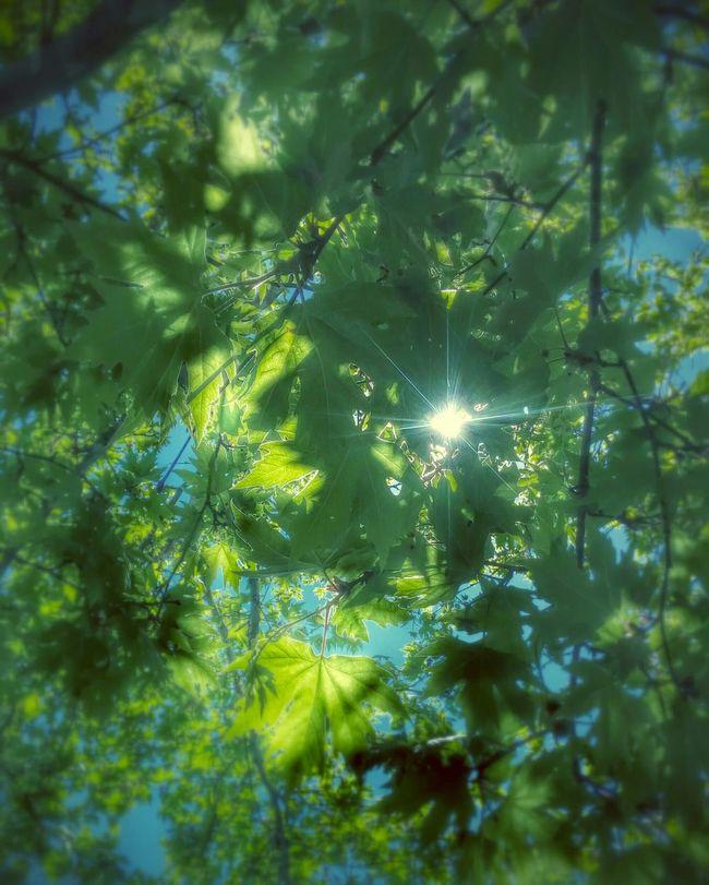 Plane-tree Trees Sun Sunshine Sunlight Morning Goodmorning