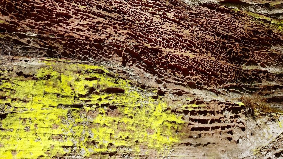 Outdoors Beauty In Nature Holes In Rock Yellow
