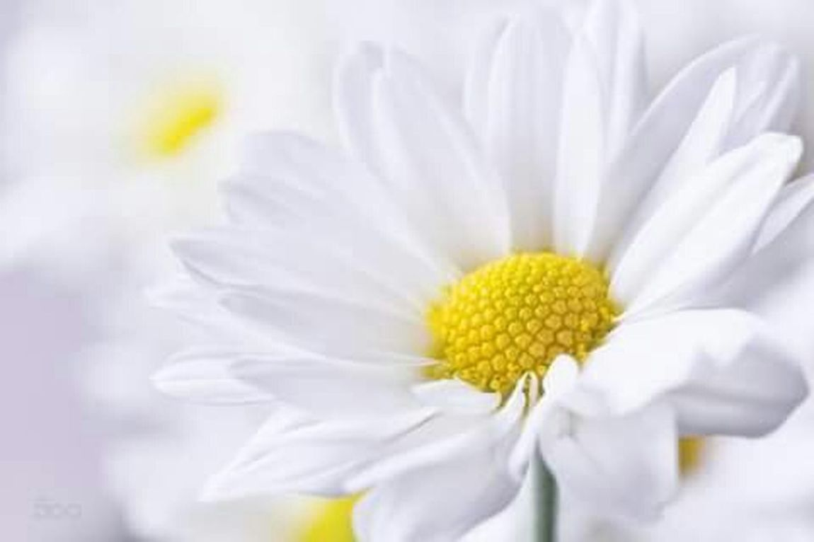 Flower Photo by I Am so Flowers Flower , Flowers , Nature , White , Daylight , Beuty , Beutyful