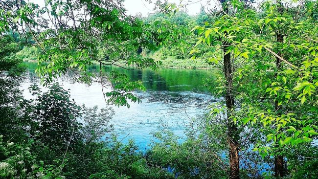 The Essence Of Summer Tree Green Color Green Colorful River Day Miracle Nature Nature_collection Nature Photography