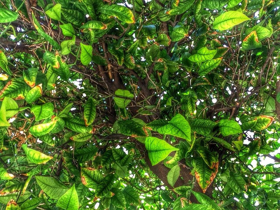 Lemon Tree branches Taking Photos Check This Out
