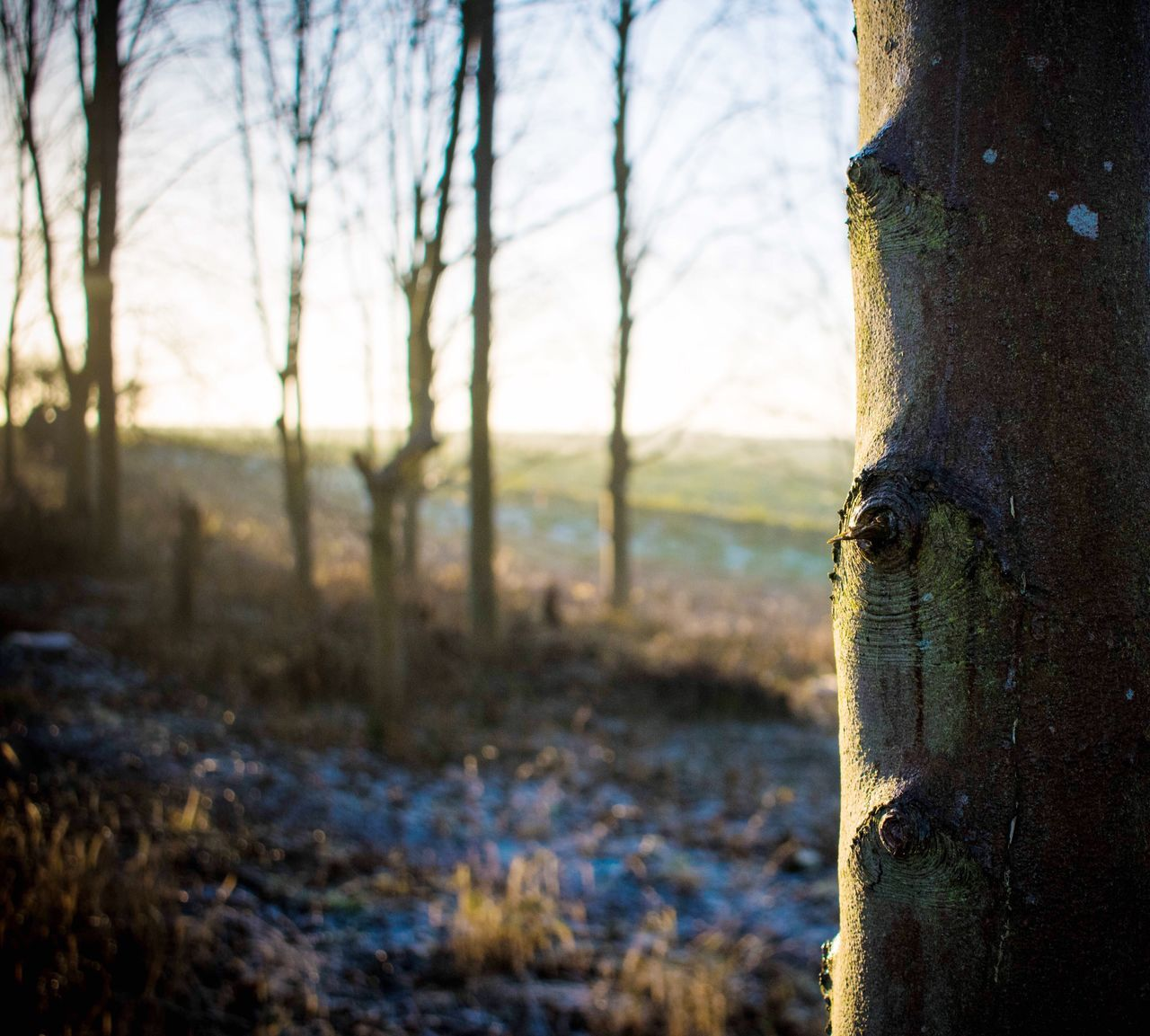 WoodLand Forest Forest Photography Winter Frost Fog Foggy Walk Countryside Sunset Tree Depth Of Field Distance