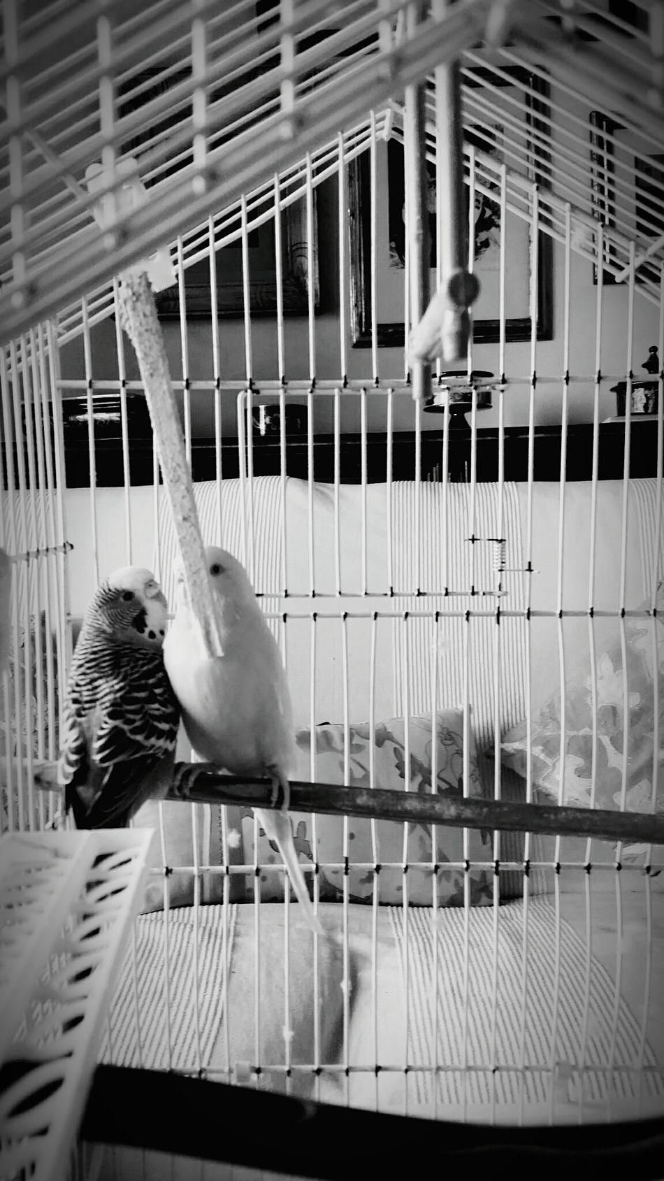 What do you see from the inside?Do You Buggy Bird Animal Themes Perching Cage Architecture Wildlife Built Structure Parrot Animals In Captivity Close-up Black And White Gabbia Pappagallini Retro Styled If I Wore Your Shoes The Bird's Eye View The Bird Always Looks Where He Can't Go Birdcage Blue Focus On Foreground Vibrant Color Beak No People Monochrome Photography