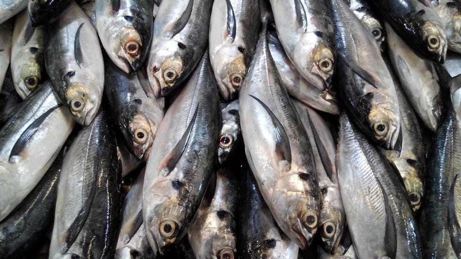 Beautiful stock photos of fish, Abundance, Animal Themes, Backgrounds, Day