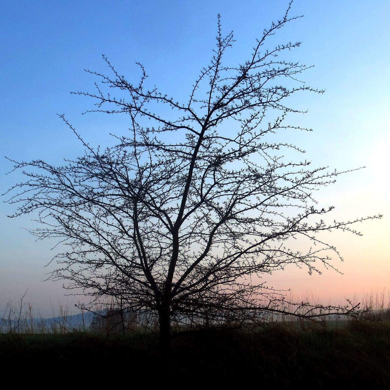 Bare Tree Beauty In Nature Branch Clear Sky Day Grass Growth Isolated Landscape Lone Low Angle View Nature No People Outdoors Scenics Sky Tranquil Scene Tranquility Tree