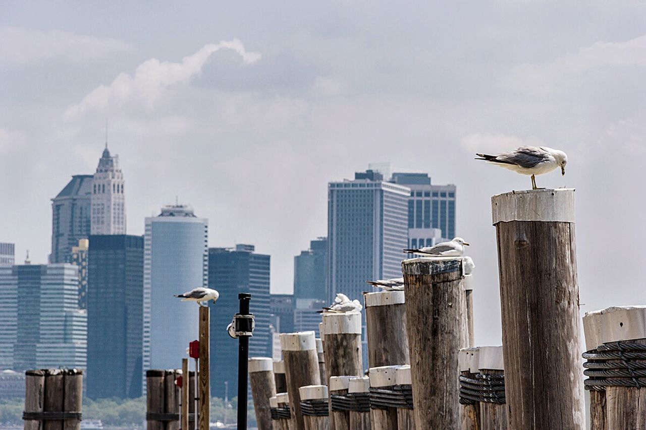 architecture, built structure, building exterior, skyscraper, sky, day, no people, outdoors, city, modern, urban skyline, cityscape, animal themes