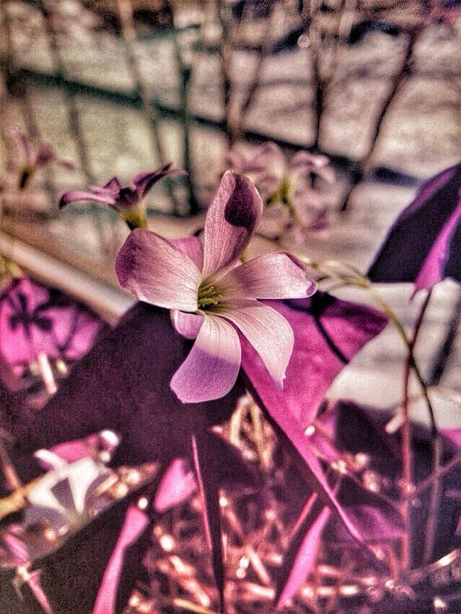 Что может быть лучше масенького раскрытого цветочка? Цветок моего сердца