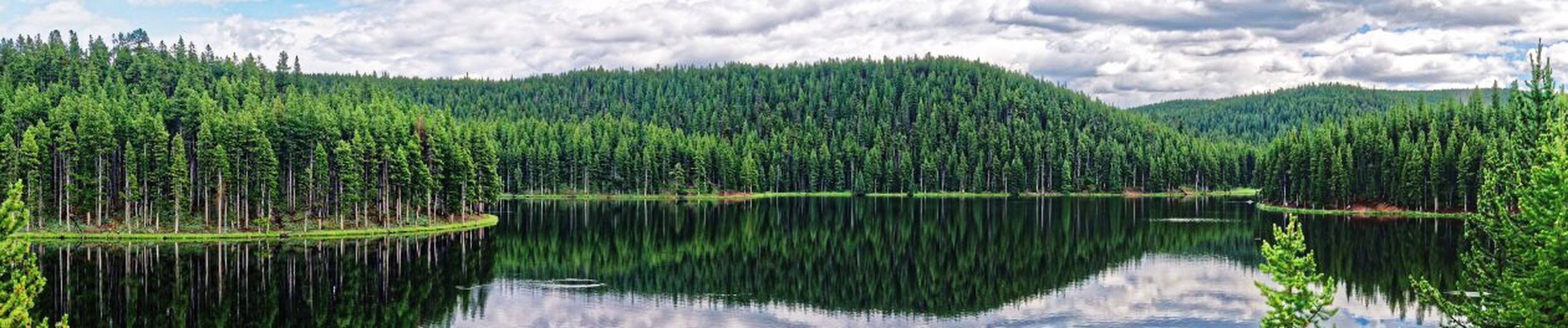 nature, water, reflection, lake, growth, tranquility, beauty in nature, no people, tranquil scene, day, outdoors, sky, scenics, grass