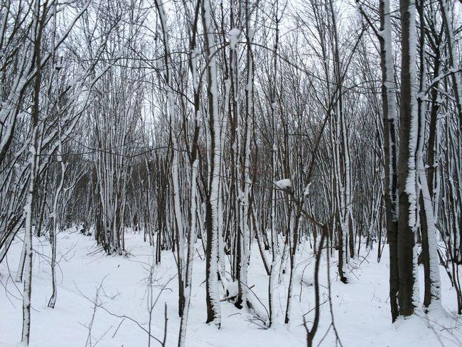 Winter Hiver Solitude Forêt Sous La Neige Snowy Forest Isolation