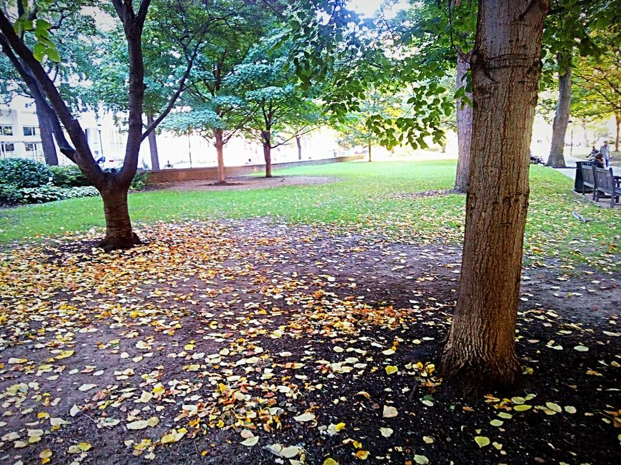 No People Nature Beauty In Nature Botany Autumn Trees Fallen Leaves
