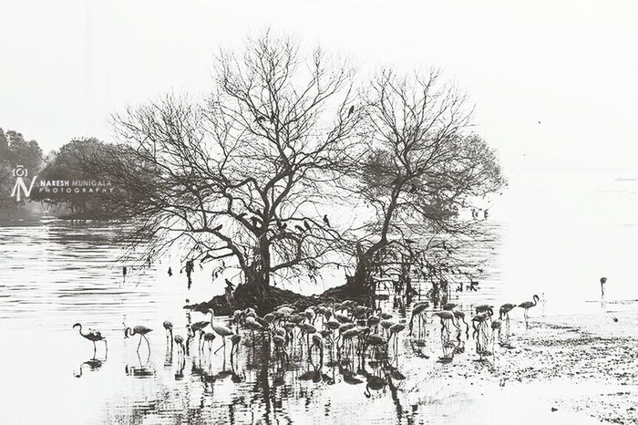 Landscape Flamingo Birds Creek Sewri Nature