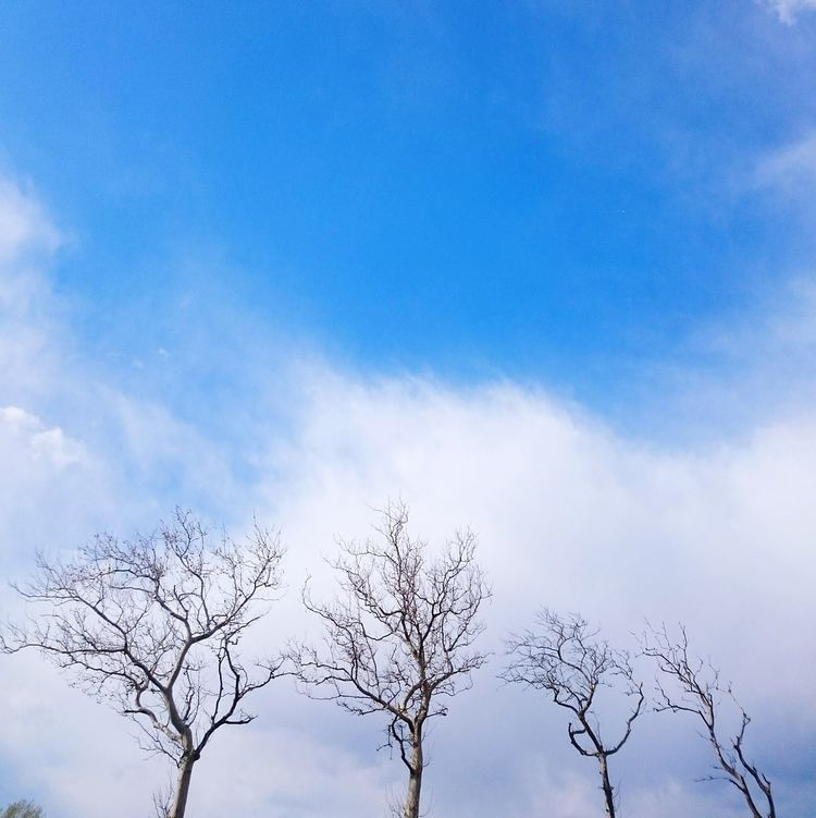 Exploring New Ground Alberi Trees Blue Sky Landscape Veneto Italy Showcase April Color Palette Pivotal Ideas