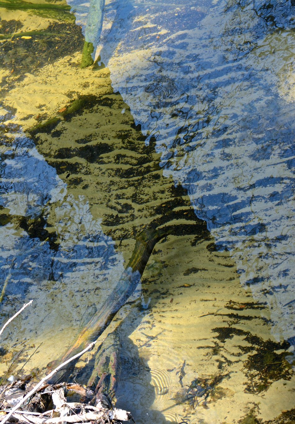 aspen reflections Aspen Beauty In Nature Nature Scenics Tranquil Scene Water Water Reflection Wildlife Preserve