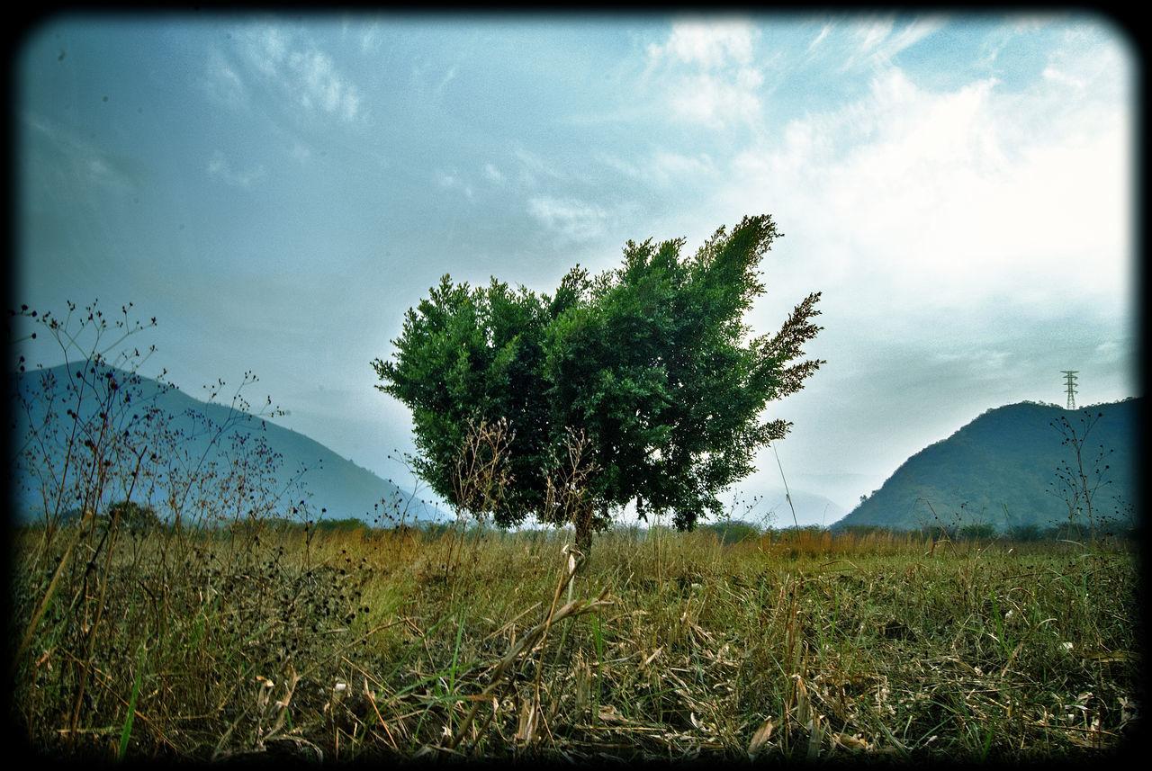 Blue Sky Ciudad Mendoza Veracruz T Cornfield Hardmann04 HDR Outdoors Tranquil Scene Tree árbol